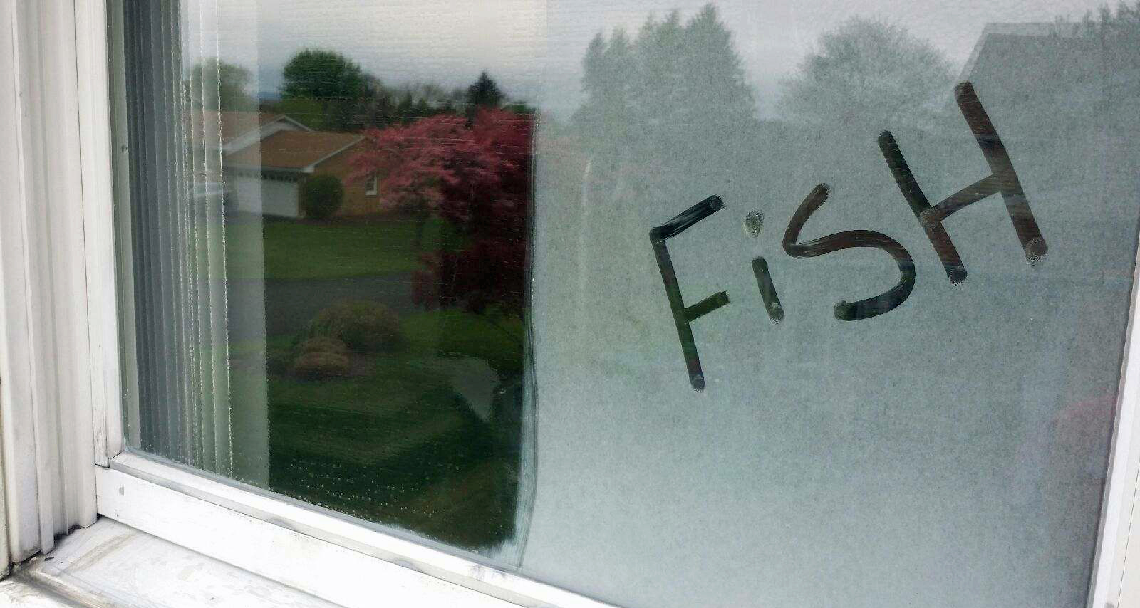 Fish Window Cleaning Allentown